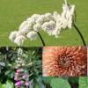 ABC Homeopathy