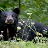 Daroji Bear Sanctuary Tour - A Heaven for Indian Sloth Bear