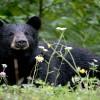 Daroji Bear Sanctuary Tour - A Heaven for Indian Sloth Bear